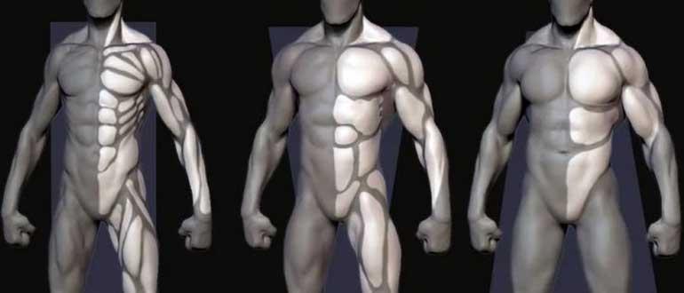 Как определить тип телосложения у мужчин