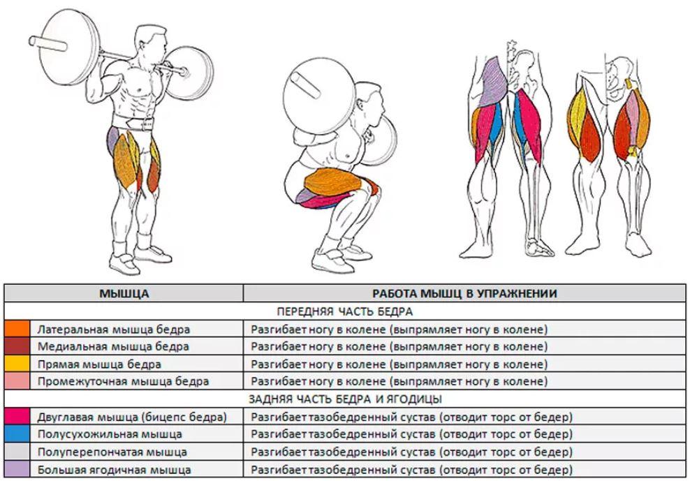 Приседания со штангой какие мышцы работают